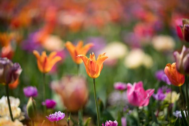 10花菜ガーデン【Nikkor105mm_f1.4】