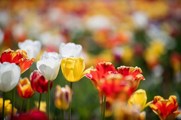 20花菜ガーデン【Nikkor70-200mm_F2.8】