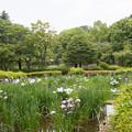 02薬師池公園【菖蒲田の眺め】2