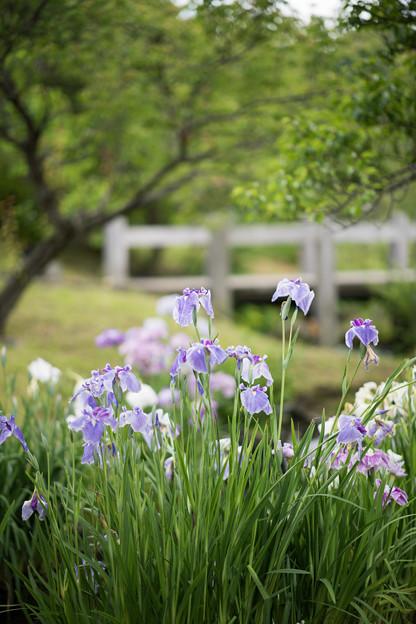 08小田原FG【渓流の梅園内の眺め】2