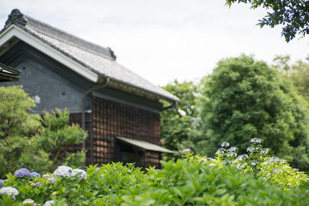12府中市郷土の森【旧島田家住宅付近】6