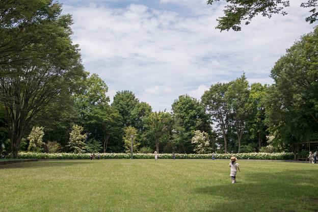 17府中市郷土の森【アナベルの小径】1