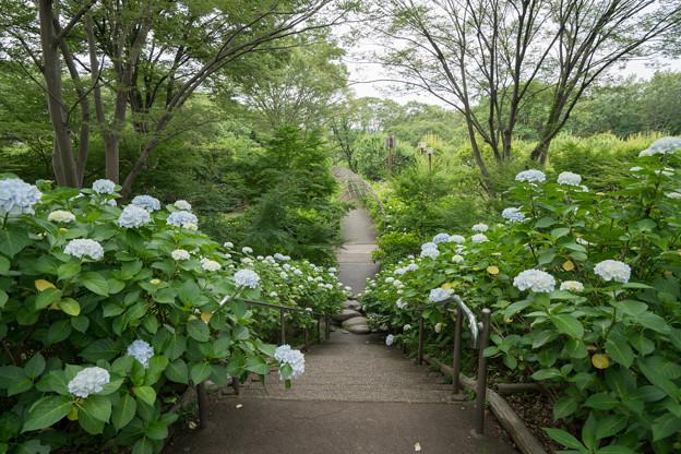54府中市郷土の森【萩のトンネル付近】