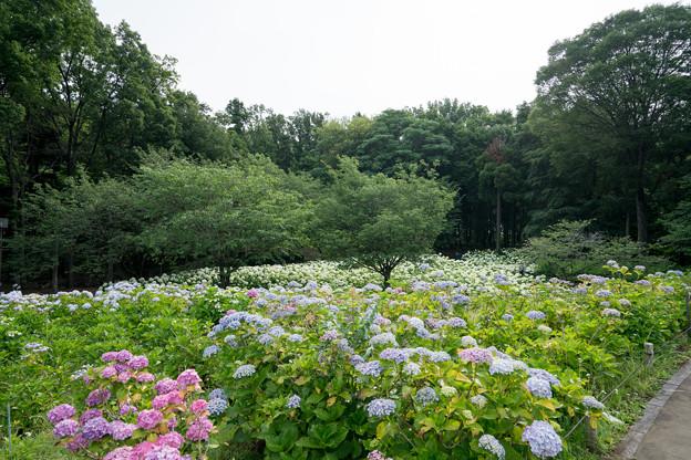 03相模原北公園【眺望】3