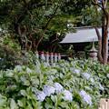 05長尾山妙楽寺【参道の眺め】2銀塩NLP