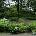 35薬師池公園【アジサイ園】1