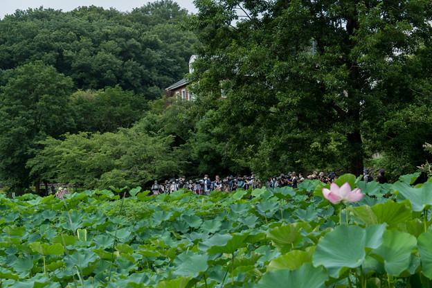 01薬師池公園【大勢の観客はカワセミ狙い】