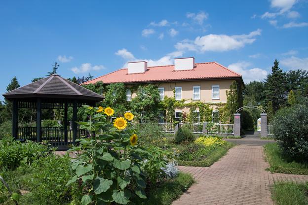 10花菜ガーデン【チャペックの家とヒマワリ】
