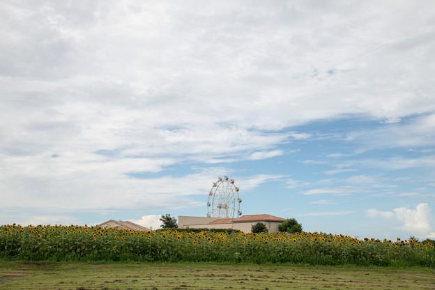 06ソレイユの丘【入口花壇の遠景】1