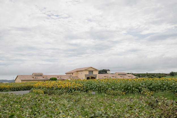 07ソレイユの丘【入口花壇の遠景】2