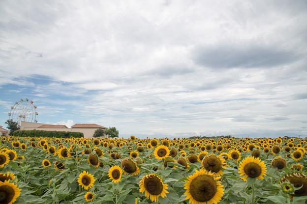 09ソレイユの丘【入口花壇の遠景】4