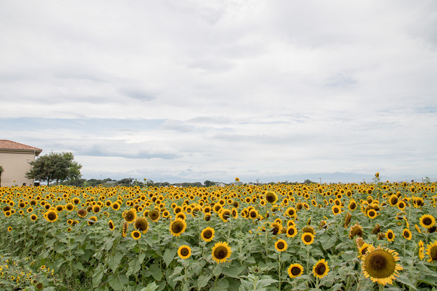 10ソレイユの丘【入口花壇の遠景】5