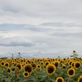 11ソレイユの丘【入口花壇の遠景】6
