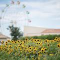 13ソレイユの丘【入口花壇の近景】1