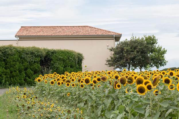 14ソレイユの丘【入口花壇の近景】2