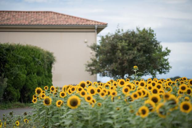 15ソレイユの丘【入口花壇の近景】3