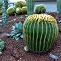 Photos: 40神代植物公園【温室の花:サボテン】銀塩