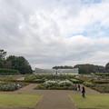 02神代植物公園【バラ園の眺め】2