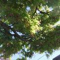 楓の小さな花 3