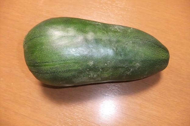 Photos: 漬物用の瓜