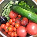 7月31日に採れた野菜