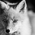 Photos: fox