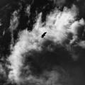 Photos: 風雲とオジロ