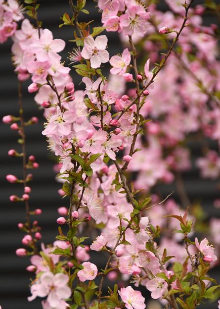 春色に映える