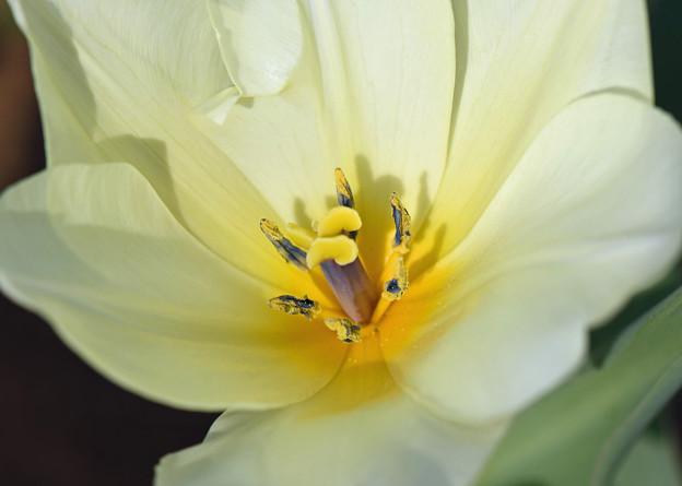 輝く花芯1