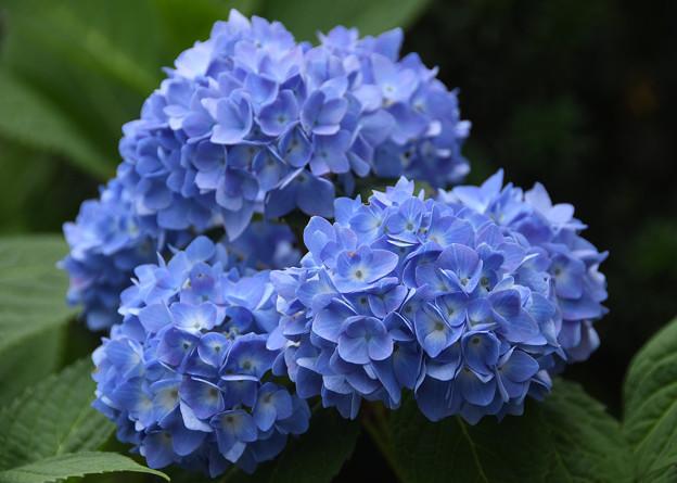 真藍(サアイ)