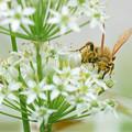 Photos: 花粉にまみれて