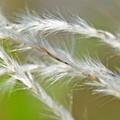 花穂(かすい)