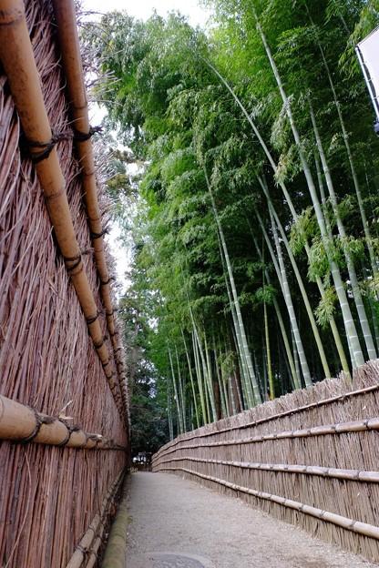 偕楽園 竹林