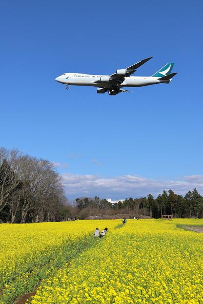 成田空港春爛漫