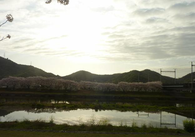 21-夢前川の桜0014