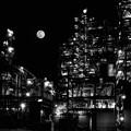 Photos: 月夜に於いて
