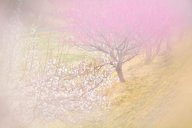 風ふかば にほひをこせよ 梅の花
