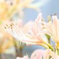 Photo: IMG_0993_2