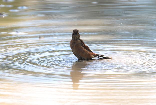 水浴びー3