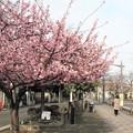 Photos: 春の気配?