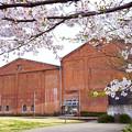 桜と赤レンガ