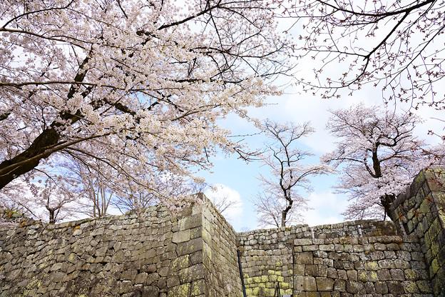 小峰城 桜門