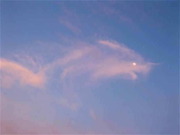 雲のおさかな ?!
