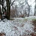 和泉葛城山の雪