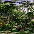 城北公園 ヒトツバタゴ 360度パノラマ写真(1) HDR