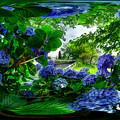長尾川右岸 紫陽花 360度パノラマ写真