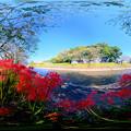 長尾川右岸 彼岸花 360度パノラマ写真