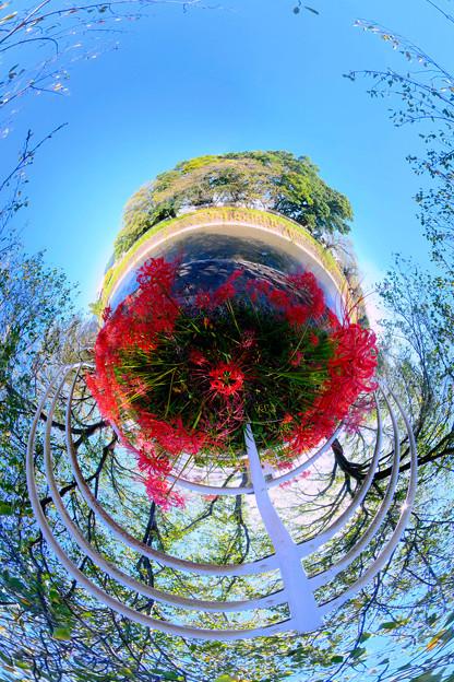 Photos: 長尾川右岸 彼岸花 Little Planet