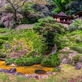 Photos: 臨済寺 庭園 (特別公開 2021年10月15日)