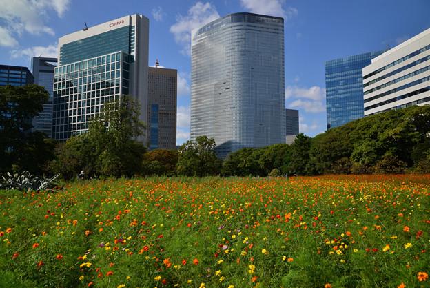 大都会の花園